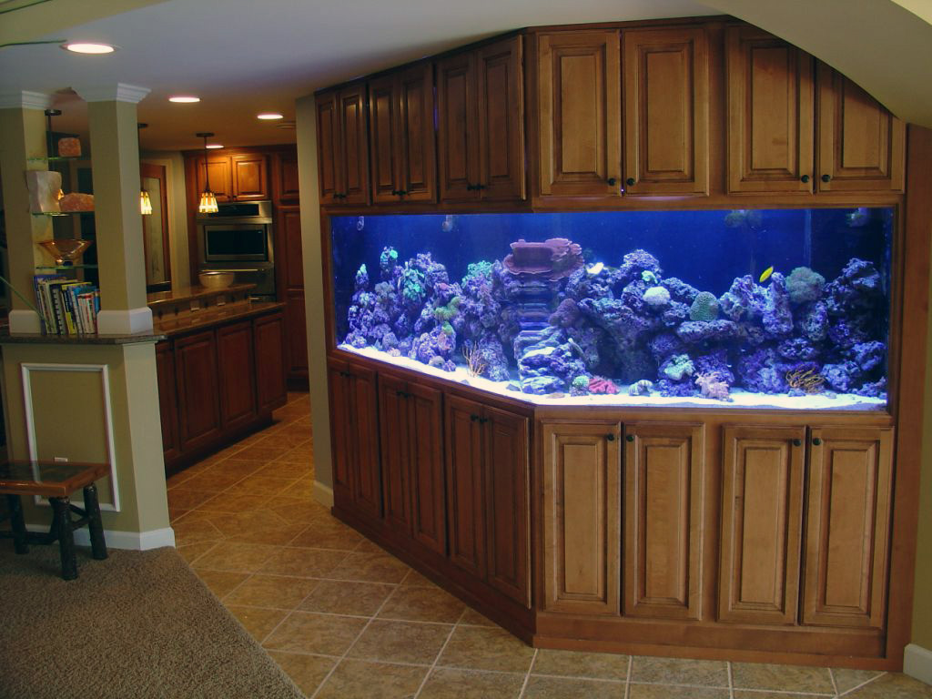 How to safely move a saltwater aquarium movers quotes for Fish tank house
